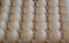 Предлагаем: Яйцо куриное пищевое столовое С1
