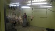 Предлагаем: Живую птицу на доращивание и убой Ульяновск