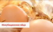 Предлагаем: инкубационное яйцо кур несушек породы Dominant доставка из г.Менделеевск