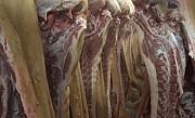 Мясо (свинина) оптом от производителя доставка из г.Воронеж