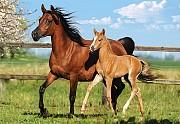 Куплю лошадей жеребят живым весом Могилев