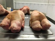Свиные ноги Шахты