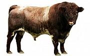 Возьмем мясо на реализацию Красноярск