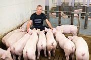 Продаю Поросята свиноматка , породы Гибридная свинка F1 I (беконная) на выращивание в Липецке  доставка из г.Липецк
