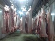 Продаю Полутуши Свиные н/к, охл, категория - II (мясная – молодняк) в Волжском  доставка из г.Волжский