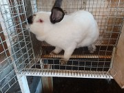 Продаю Мясо кролика в ассортименте  ГОСТ, н/к,  Охл/Зам, в Раменском  Раменское