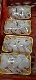 Крыло куриное - 3 фаланги  крыла,  в Ярославле  доставка из г.Ярославль