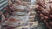 Оленина в тушах и бескостное мясо в Спб 300 доставка из г.Санкт-Петербург
