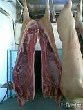 Продаю Полутуши Свиные в Новосибирске  Новосибирск