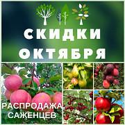 Саженцы плодово-ягодных деревьев - яблоня, груша, вишня, алыча Санкт-Петербург
